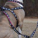 unicorn_leash_pitbull