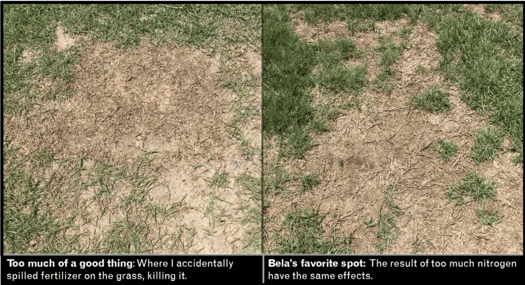 Is My Dog Killing My Grass? – Tooth & Honey